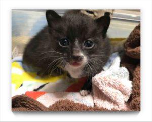 捨て猫白黒赤ちゃん
