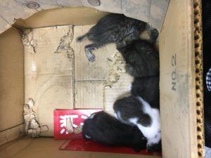 捨て猫赤ちゃん5匹